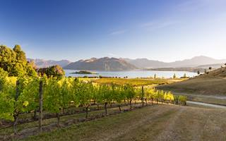 Lake Wanaka Vineyard, New Zealand
